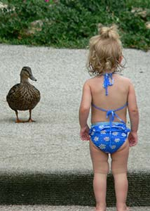 Toddler watching a duck